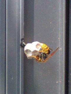 蜂の巣だぁっ